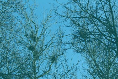 Befriending Birds - Blue Sky and Birds Nests